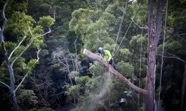 How Much Does Tree Removal Cost?