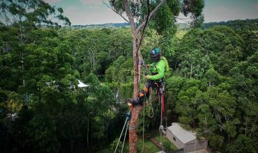 What Is An Arborist: Tips For Hiring An Arborist