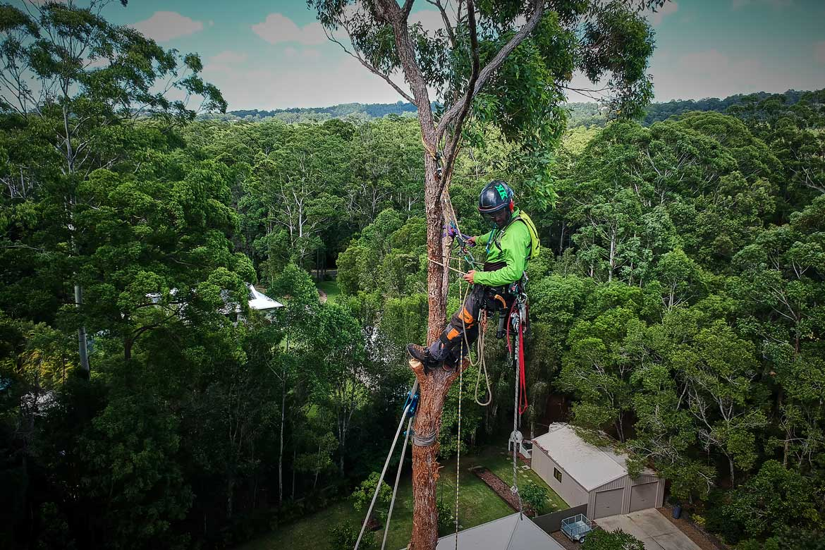 Choosing-an-arborist-Sunshine-Coast1