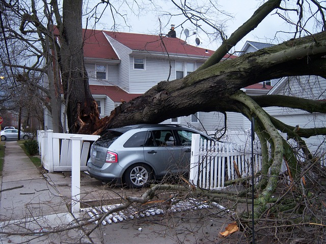 Emergency storm damage sunshine coast - tree removal - stump grinding - tree cutting services