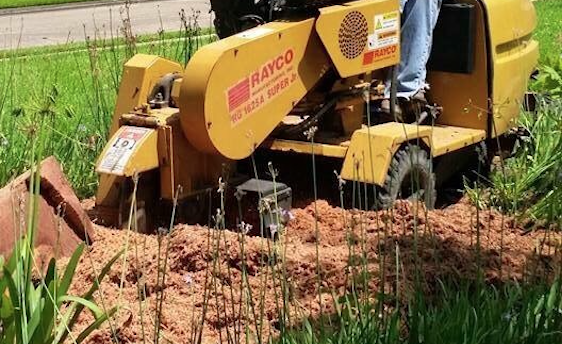 Stump grinding sunshine coast - tree services - stump removal specialists