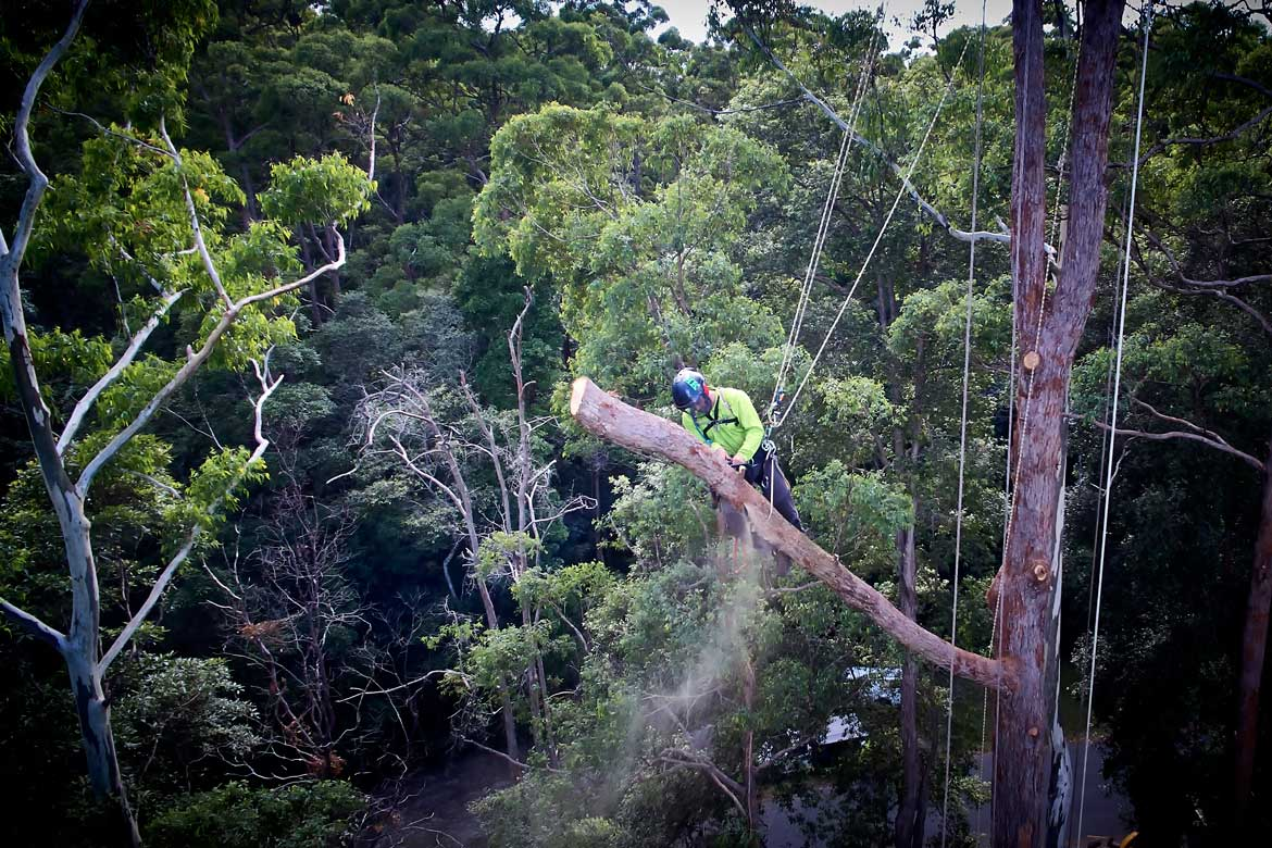 arborist nambour - tree services nambour - garden maintenance - stump grinding - mulching