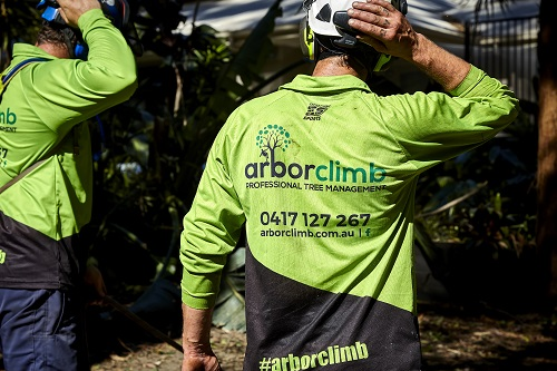 tree services sunshine coast - arborist coolum - tree removal coolum - trees and garden maintenance - mulch - stump grinding coolum