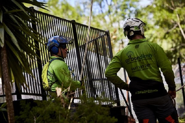 emergency tree service sunshine coast - storm damage - tree removal sunshine coast