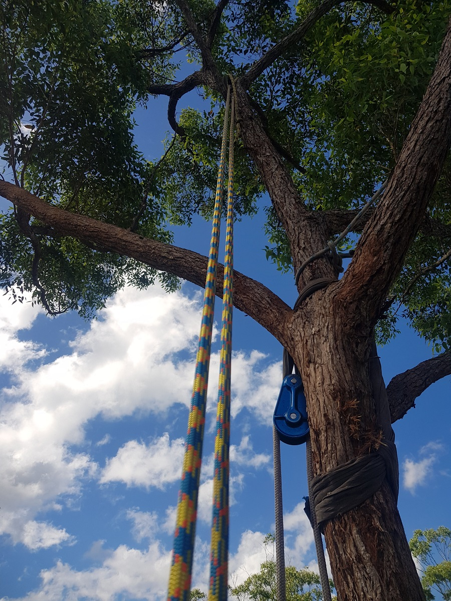 tree services sunshine coast - arborist coolum - tree removal coolum - trees and garden