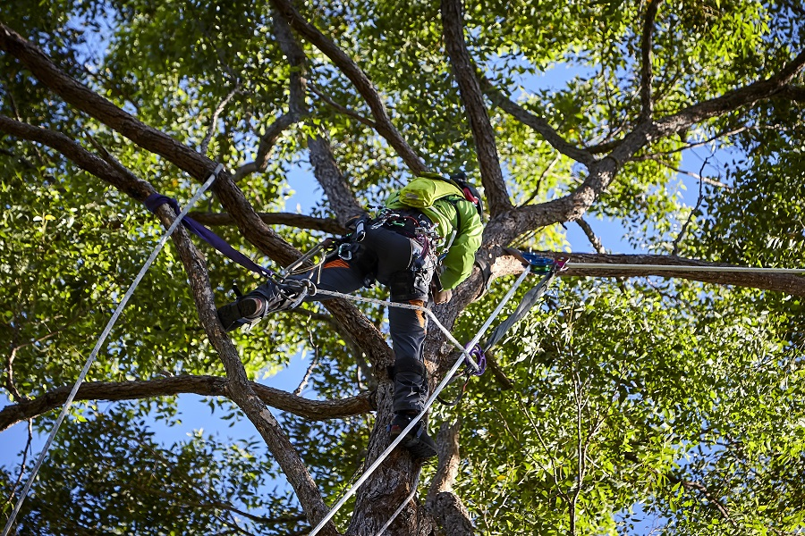 Arborist-Cooroy-Tree-Services-Cooroy-Tree-Removal-Pruning-Trimming