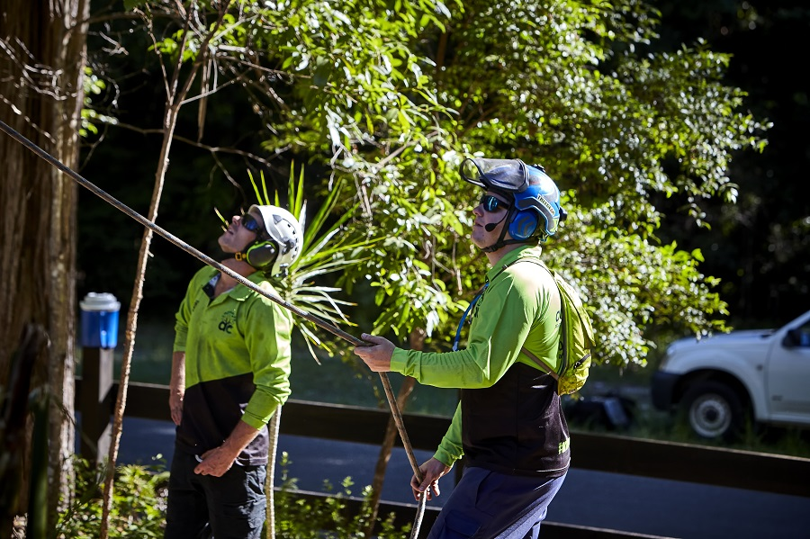 Arborist-Golden-Beach-Tree-Removal-Services-Golden-Beach