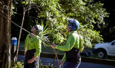 What is an Arborist assessment?