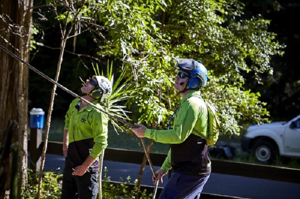 arborist report sunshine coast - arborist assessment - tree services sunshine coast - tree removal - stump grinding - mulching