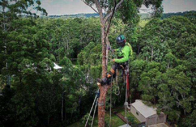 storm damage sunshine coast - emergency storm damage and prevention - tree services - tree removal sunshine coast