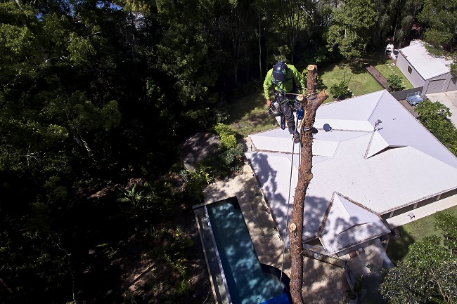 tree cutting sunshine coast - arborists - tree climbing pruning removal in sunshine coast qld