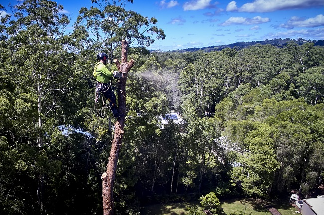emergency tree services sunshine coast - arborists - stump grinding - tree mulching pruning lopping