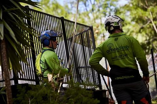 tree services nundah - tree removal trimming pruning and clearing - stump grinding nundah qld