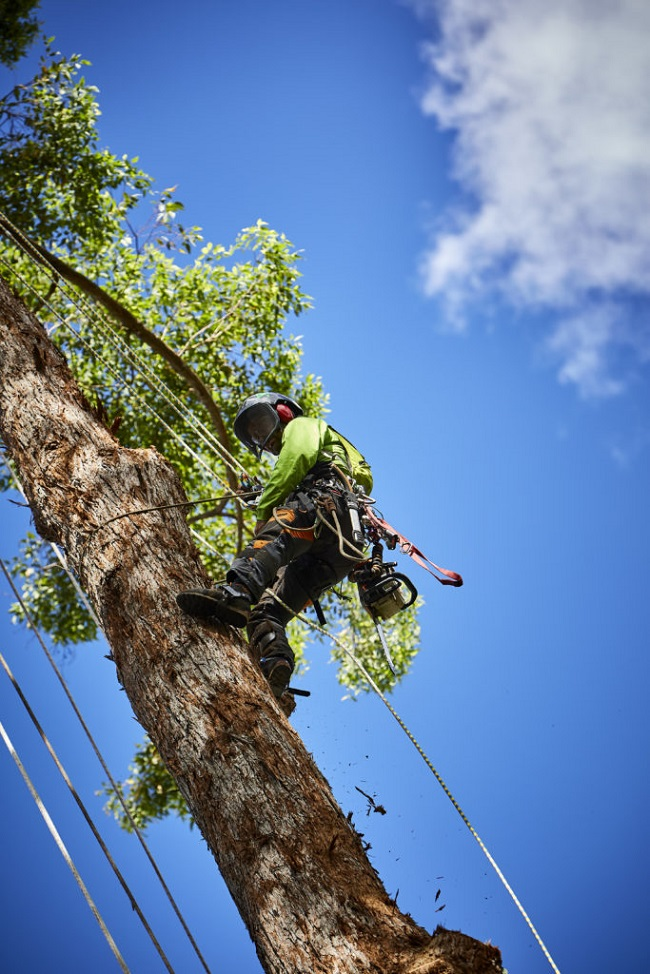 tree services chermside - tree removal trimming pruning and clearing - stump grinding chermside qld