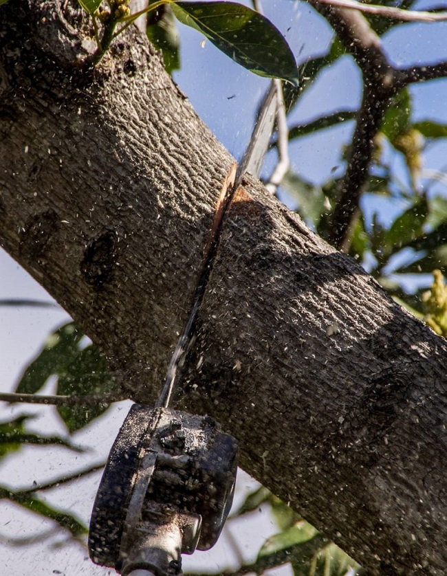 tree lopping meldale - tree removal mulching trimming pruning - stump grinding - tree services meldale qld