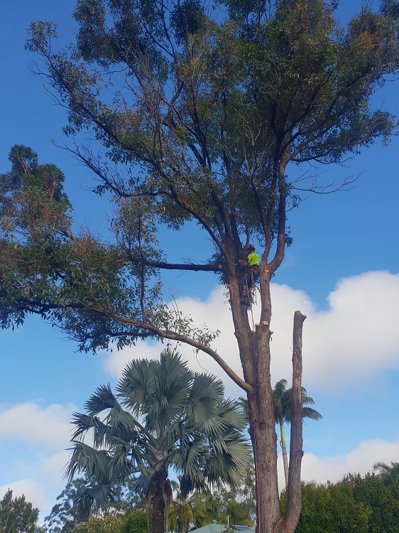 tree services sunshine coast - emergency storm damage service - tree lopping cutting and removal